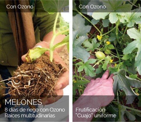 Melones con Ozono