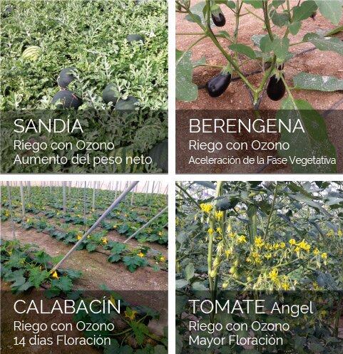 Diferentes cultivos con Ozono